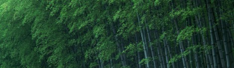 Bamboo-1680x1050-Widescreen-39120_cropped